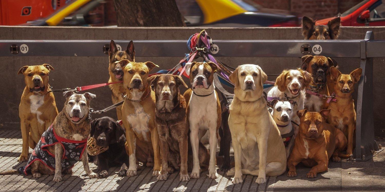 offering-dog-pack-walks.jpg