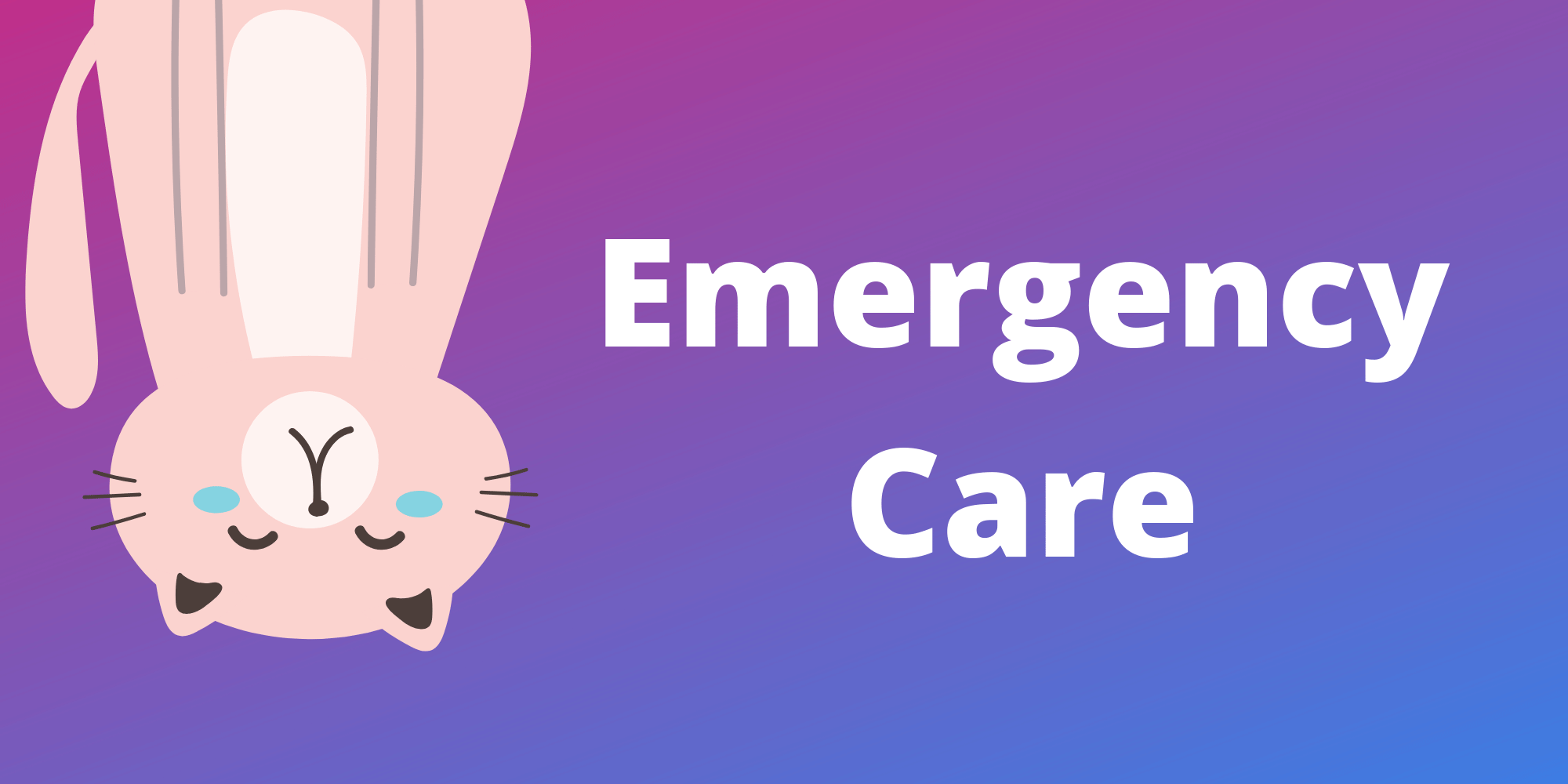 Emergency Care Tips for Cat Sitting