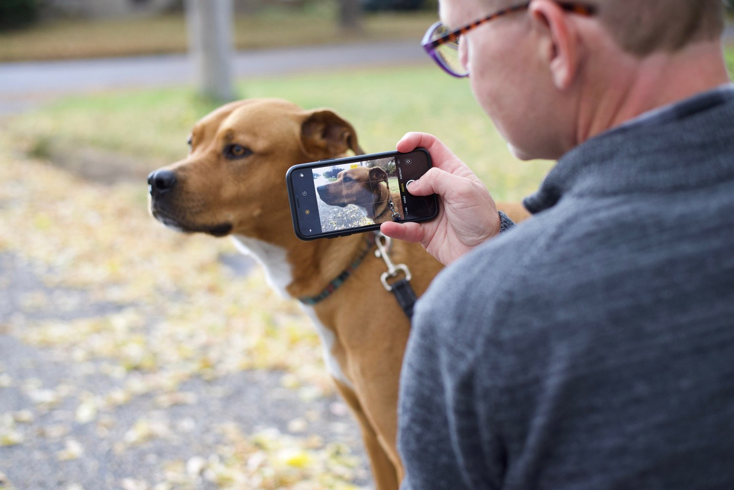 Away-home-and-pet-dog-cellphone