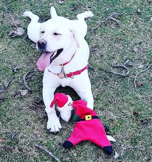 Happy dog with toy