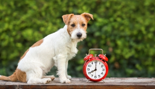 Picture of dog with clock