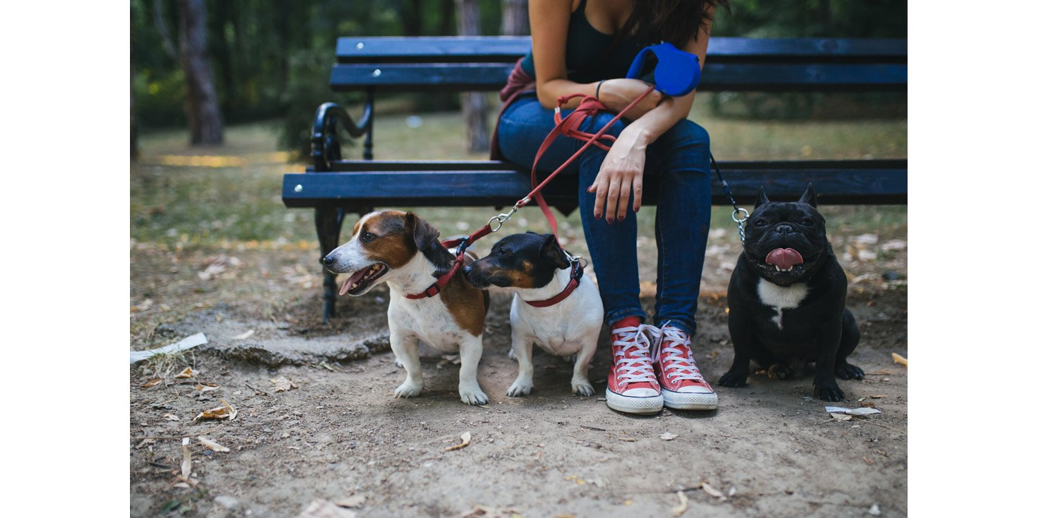 sitting in the park with three small dogs
