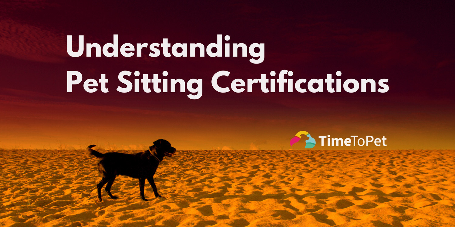 Understanding pet sitting certifications dog on beach