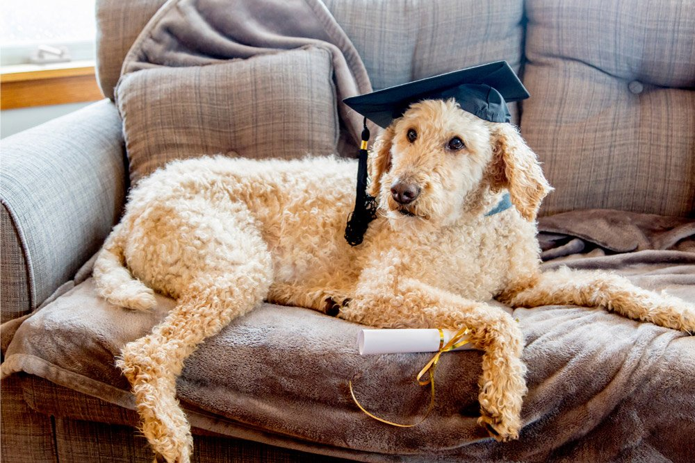 dog with graduation hat and diploma
