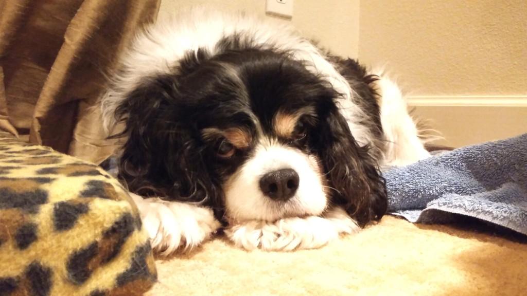 Pawsabilities Pet Sitting LLC  Logo
